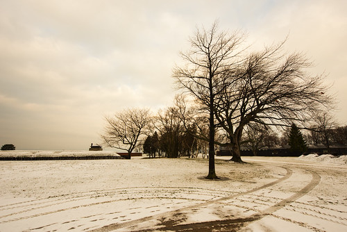 landscape trees winter cloudy sepia road steps snow ice tree monochrome