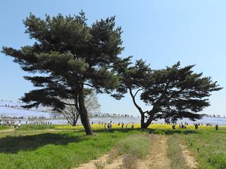 ひたち海浜公園 みはらしの丘 31