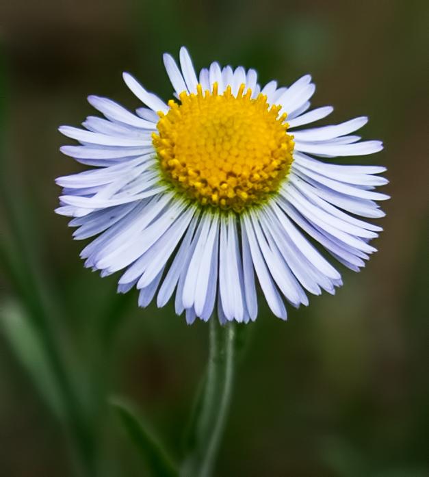 Wild-Flower-20-7D2-081117