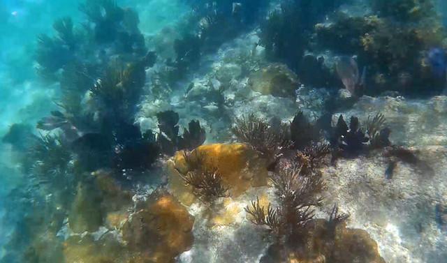 dry-tortugas-snorkel
