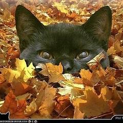 #happyfirstdayoffall #happyfirstdayoffall🍁🍂🍃  Happy Fall/ Autumn  #happyfirstdayofautumn #happyfirstdayofautumn🍂