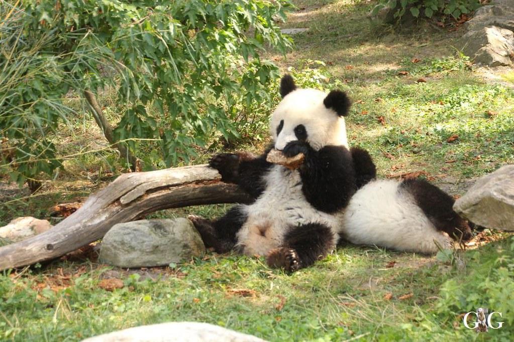 Ausflug Zoo Wien 26.08.2017166