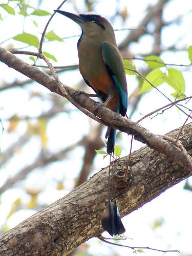 barrahonda costarica guanacaste