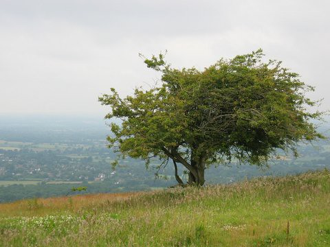 21 tree