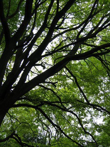 32 tree