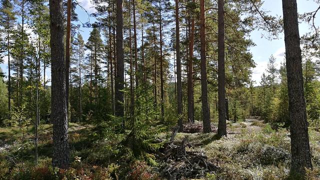 Sweden 2017