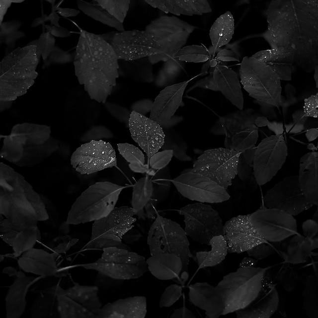 Mist Pooling On Leaves 008