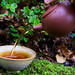 Small photo of Pouring tea