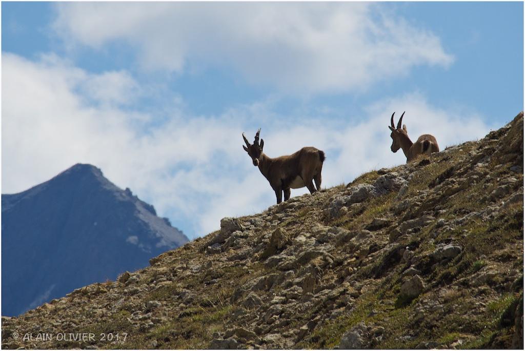 Randonnée au Col de la Vanoise 36379032660_15dd2643ac_o
