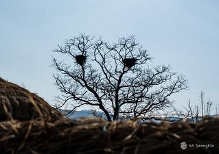 Skull Tree(해골나무)