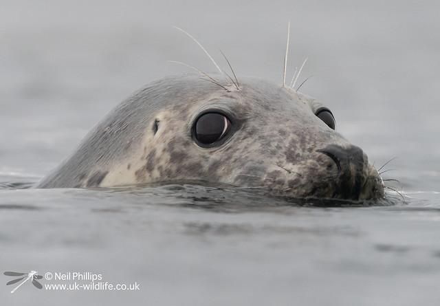 Seal-25