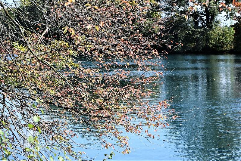 River Aar 27.09 (12)