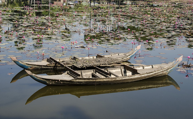 Cambodia - Boats and Lilies