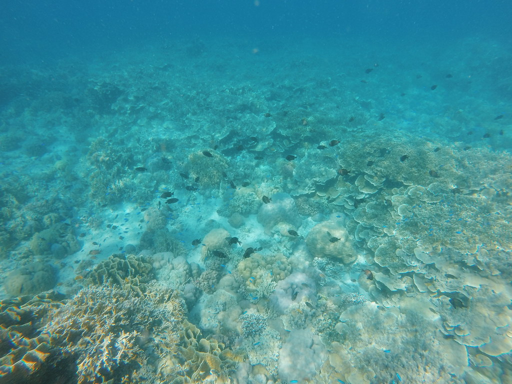 Pescador Island and My First Snorkeling Experience
