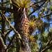 Epiphytes B027403focPr por jvpowell