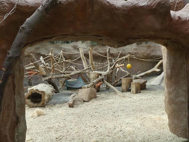 Gorillaanlage, Zoo Prag