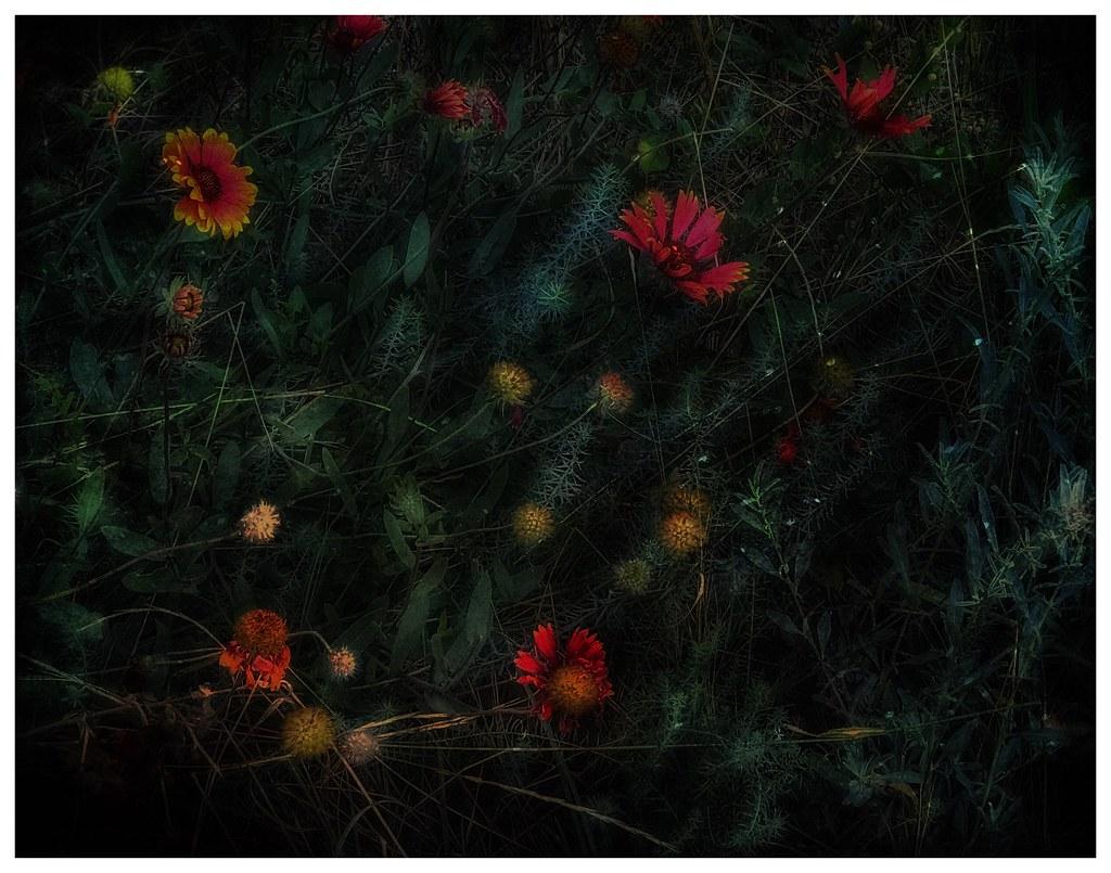 Last of the Wildflowers