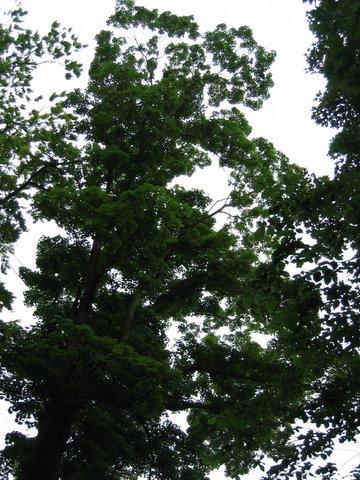 02 tree