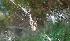 """Will you walk into my parlour"" said the spider to the fly."