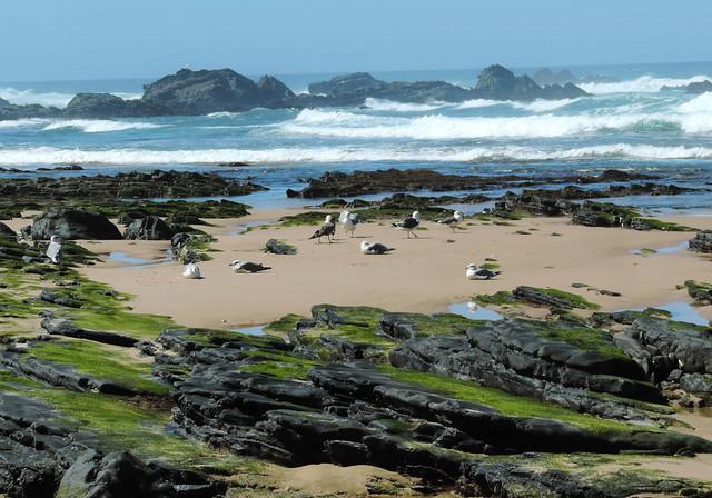 Coastal Hikes: Praia da Carriagem, Alentejo, Portugal