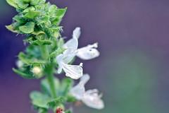 garden flowers IMG_7074