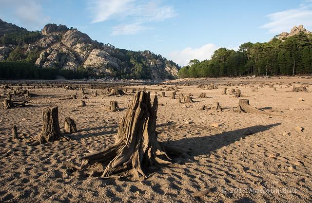 Former Forest - Corsica (108)