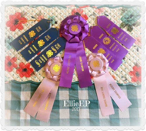 2017 Fair Ribbons Ellie