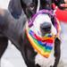 Belfast Pride 2017 - Doggos!