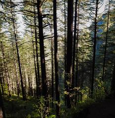 Multnomah-Falls-Columbia-Gorge-DSCN3296-Pano