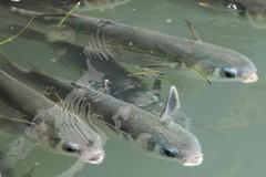 Fishes Honeymoon Island FL .