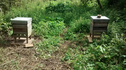 new bee colonies Aug 17 4