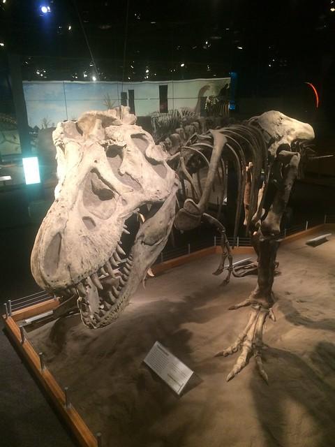 Drumheller Tyrell T-Rex