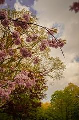 Rochester Lilac Festival 2017