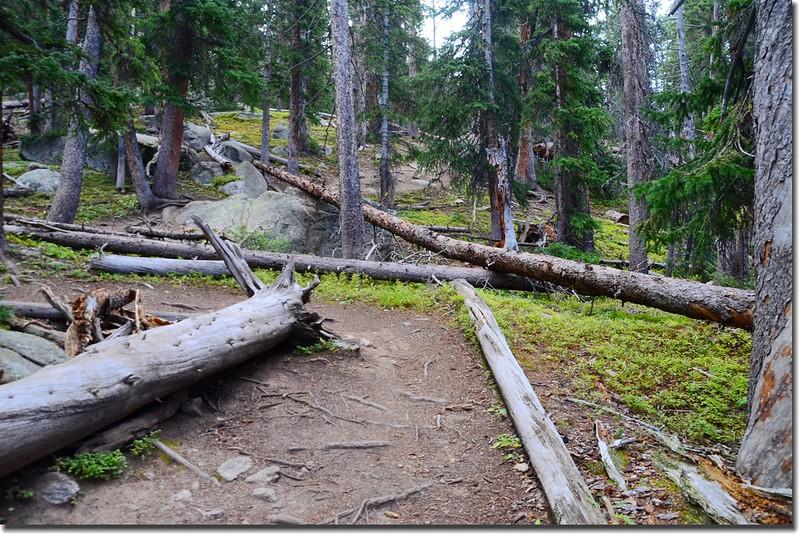 Mount Yale Trail (4)