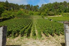 Burgundy Sept 2017-3485.jpg