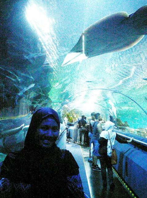 Hijab Morfosa dan Aquarium