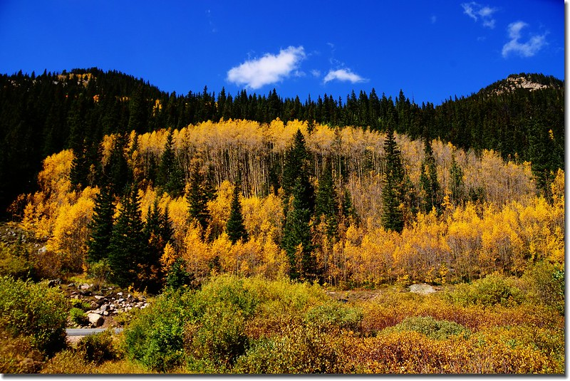 Fall colors, Guanella Pass, Colorado (18)