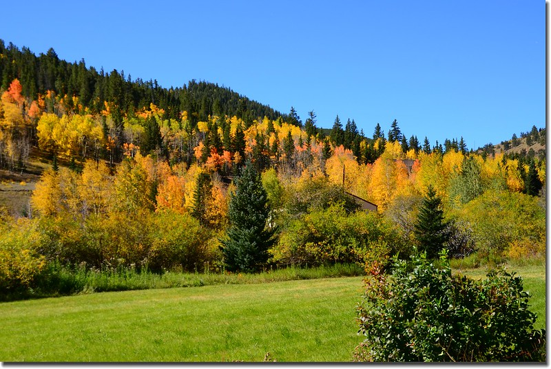 Fall colors, Kenosha Pass  (1)