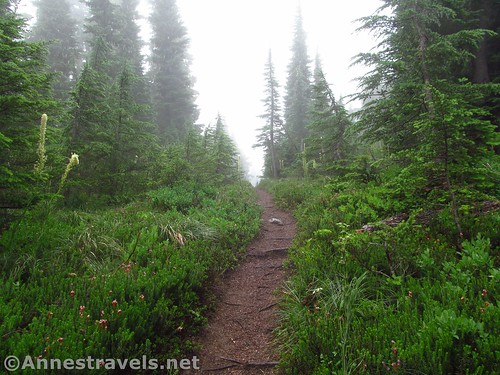 Along the Mazama Trail in Mt. Hood National Forest, Oregon