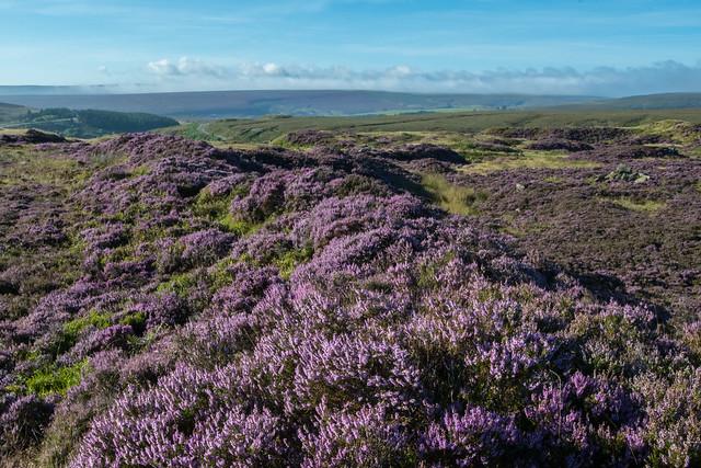 Peak District Moors
