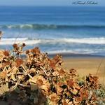 Photos des lecteurs | La dune landaise - la haut au balcon
