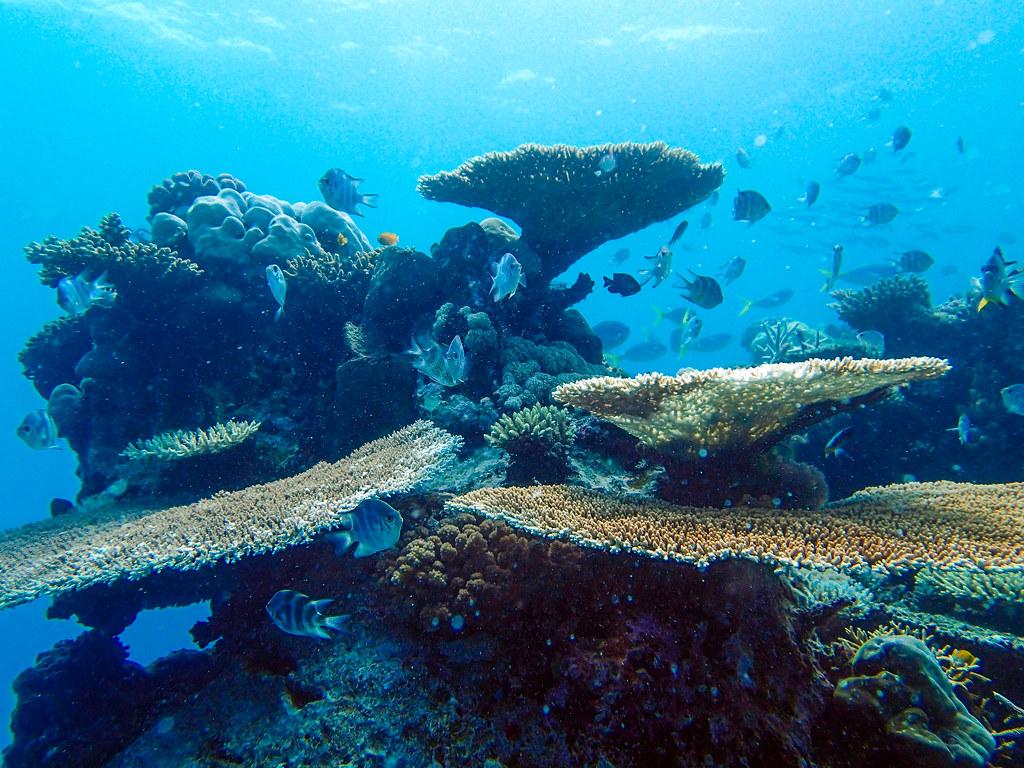 Dyreliv ved Great Barrier Reef, Australien