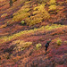 Small photo of Fall colors in the eastern Alaska Range.