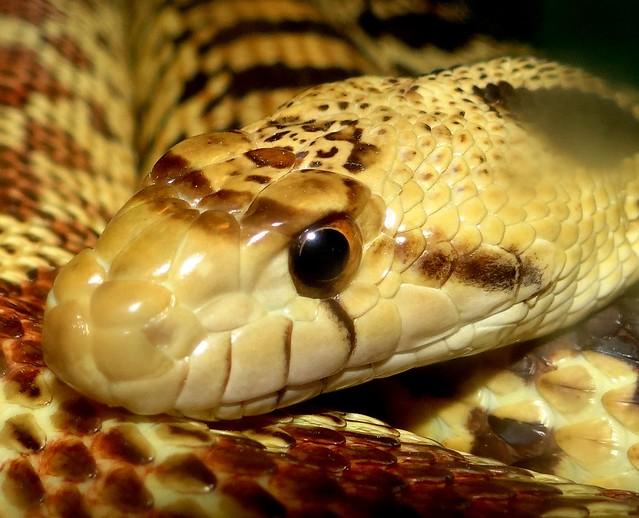 Content snake., Sony DSC-HX200V