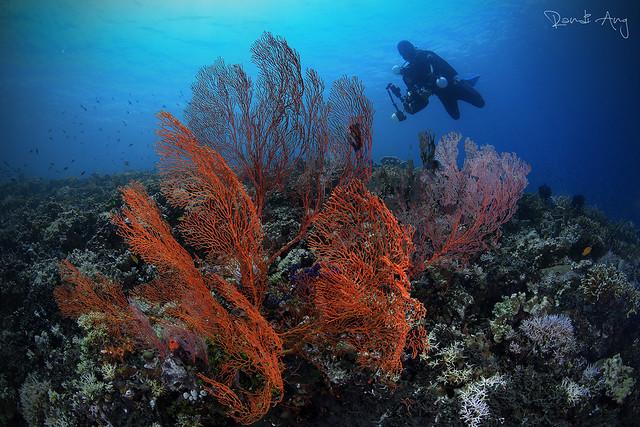 Fan Coral, Canon EOS 6D, Canon EF 15mm f/2.8 Fisheye
