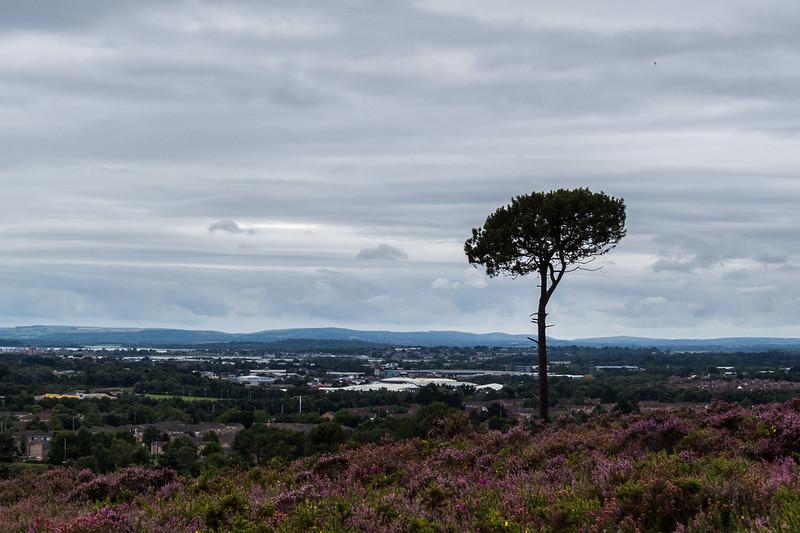 Overlooking Poole