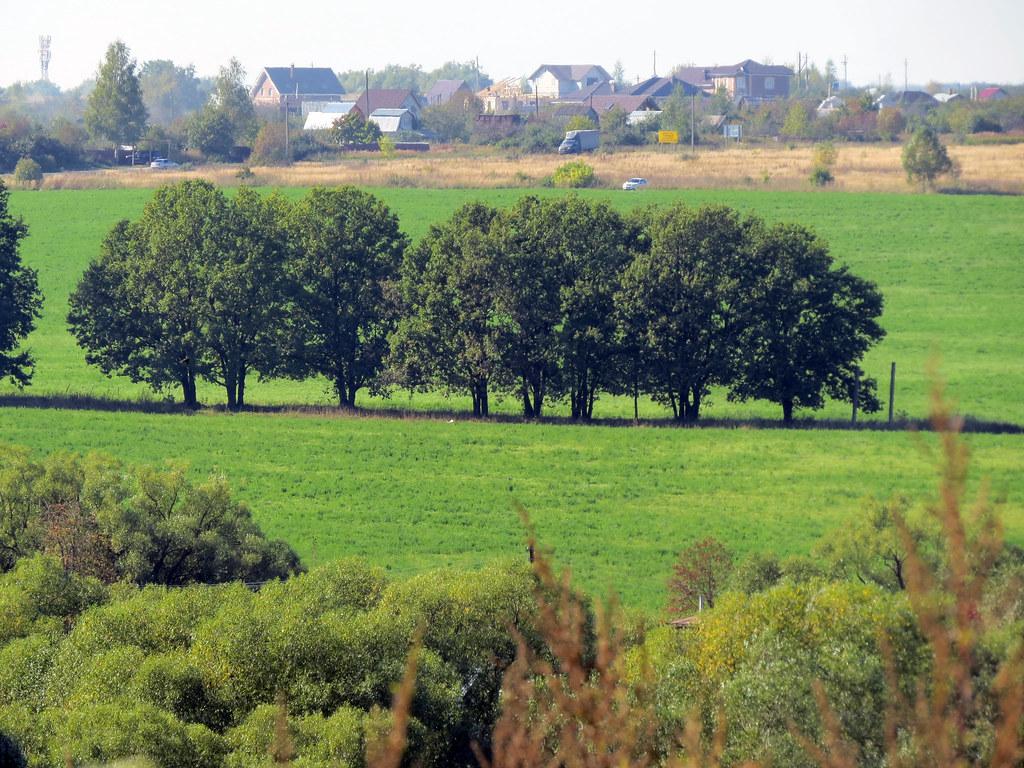 Вид на дубовую аллею