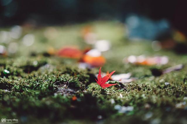 十年,京都四季 | 卷二 | 年月輪轉 | 23