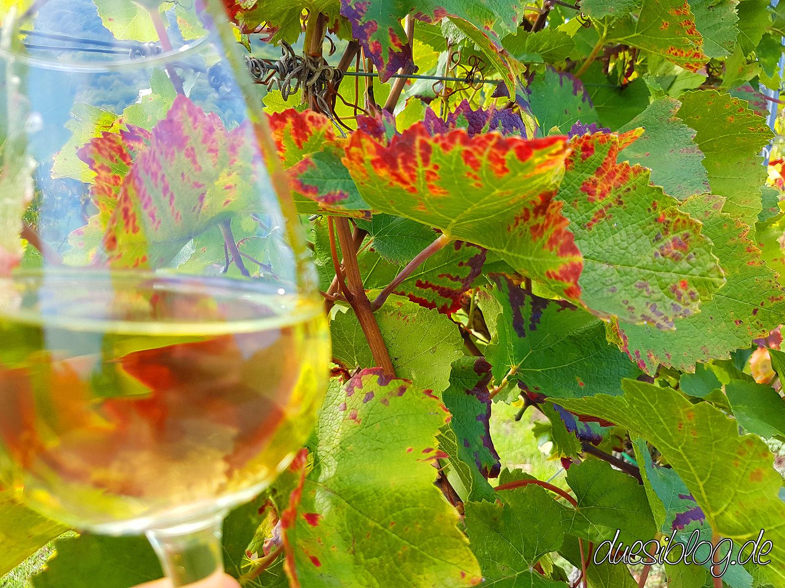 Generation Pfalz WtasO (Wein trinken an schönen Orten): mit Scheuermann im Deidesheimer Tempel