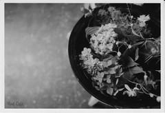 6月の憂鬱 (Melancholy of June) by Noël Café